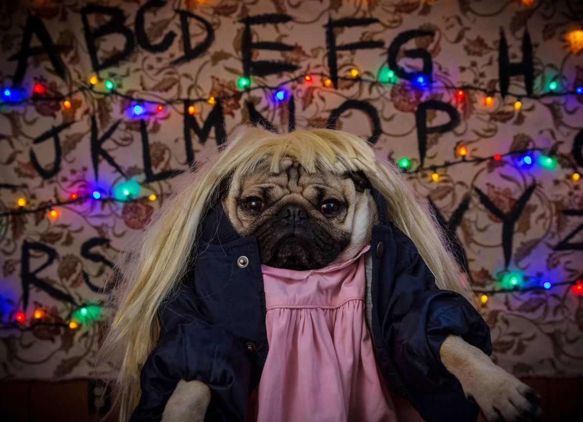 The Best TV Show Opening Made By Doug The Pug